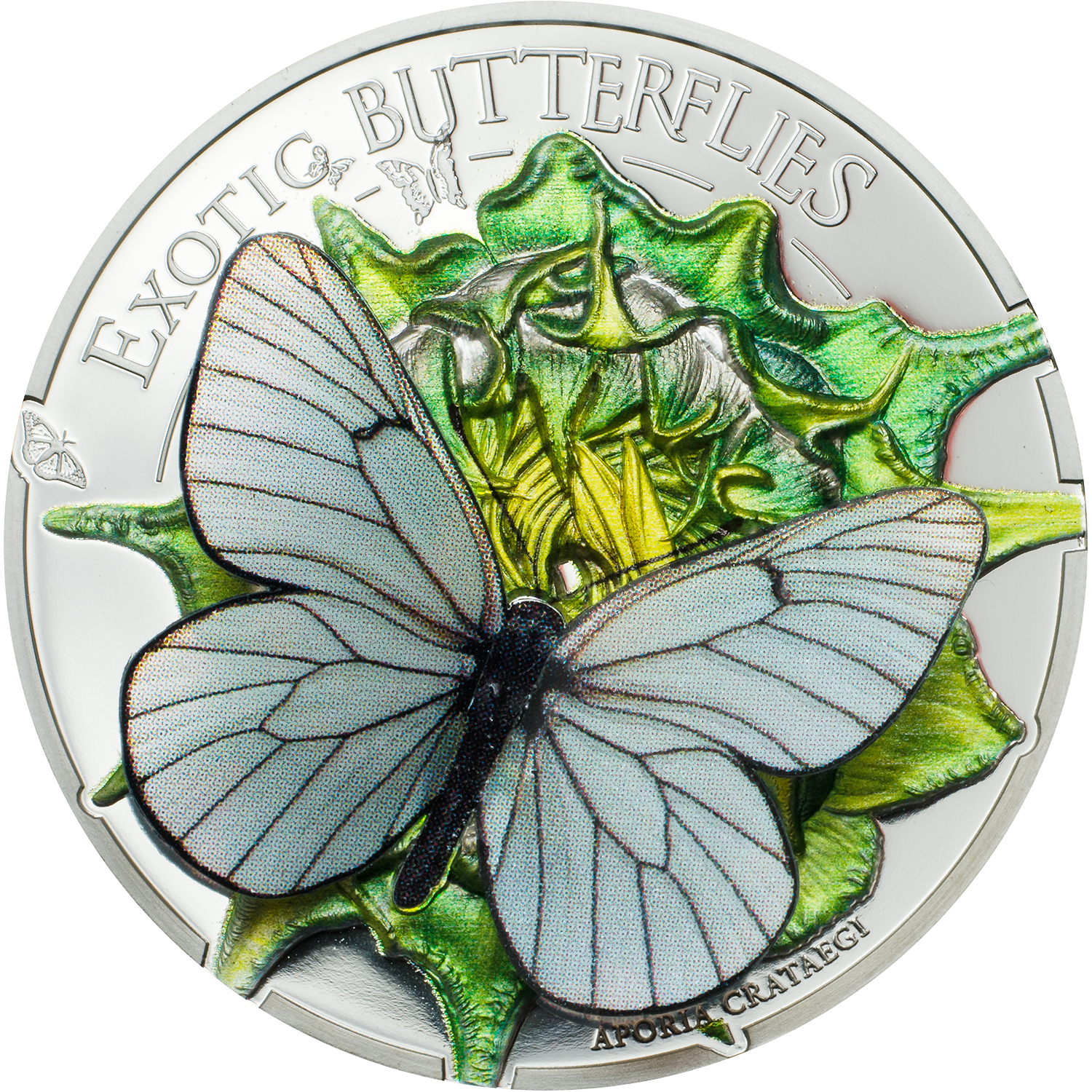 Mongolia - 2017 - 500 Togrog - Butterflies in 3D BLACK-VEINED WHITE