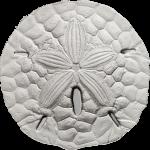 Palau - 2017 - 1 Dollar - Sand Dollar