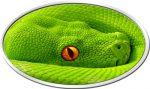 Niue - 2016 - 2 Dollars - Animal Skin GREEN TREE PHYTON (PROOF)