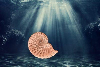 Mongolia - 2020 - 1000 Togrog - Golden Ammonite