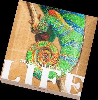 Cook Islands - 2020 - 5 Dollars - Magnificent Life CHAMELEON