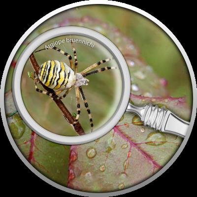 Republic of Cameroon - 2020 - 500 Francs - The Secret Garden - Wasp Spider