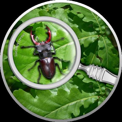 Republic of Cameroon - 2020 - 500 Francs - The Secret Garden - Stag Beetle